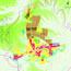临澧县城市总体规划